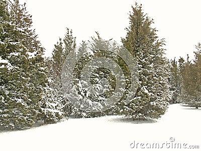 Park im Schnee 2