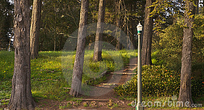 Park Path and Lamp, Sunset