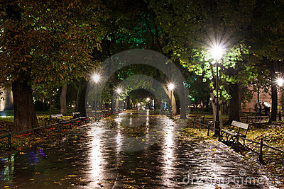 Park in a rain, night scene