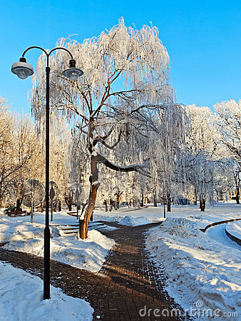 Park in winter