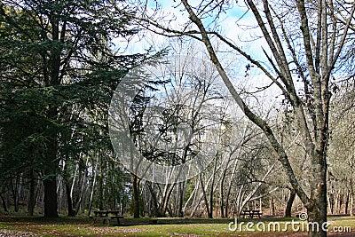 Park in Winter (Mt. Franklin) 2