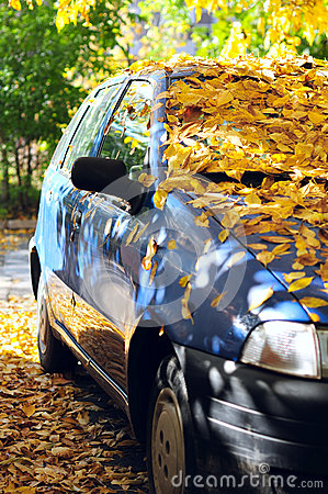 Parked car covered with yellow leaves