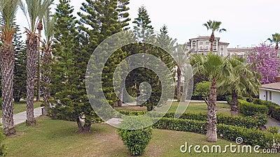 Parken Sie mit Palmen und Bäumen, Draufsicht, Brummenvideo stock footage
