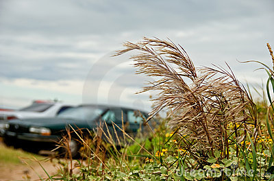 Parking by a coastal sanddune