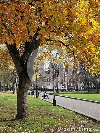 Free Parkland Autumn Colours Royalty Free Stock Image - 17041076
