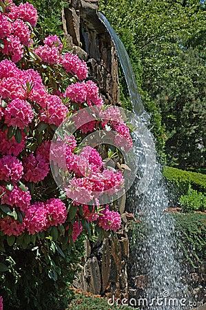 Parkują wodospad kwiaty
