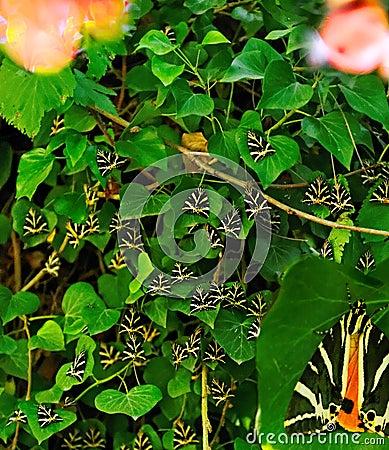 Paros Valley of Butterflies
