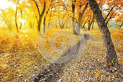 Parque de la mañana del otoño
