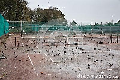 Parque de la orilla después del huracán Sandy Foto editorial