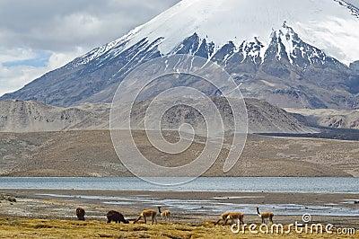 Parque nacional de Lauca, o Chile
