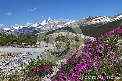 Parque provincial A do Mt. Robson
