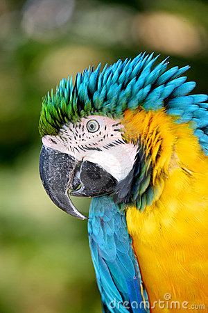 Free Parrot Royalty Free Stock Photo - 1382435