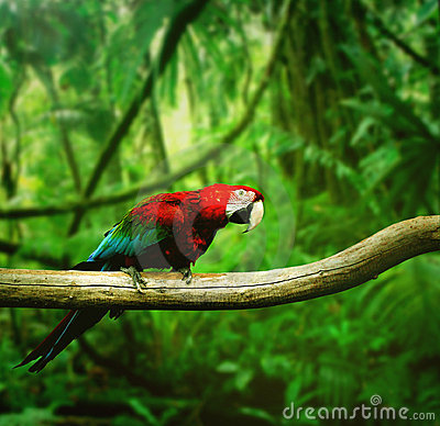 Free Parrot Royalty Free Stock Image - 17751026