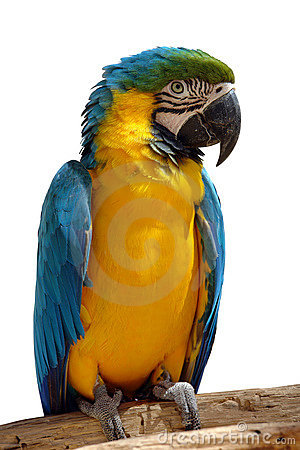 Free Parrot Stock Images - 2633284