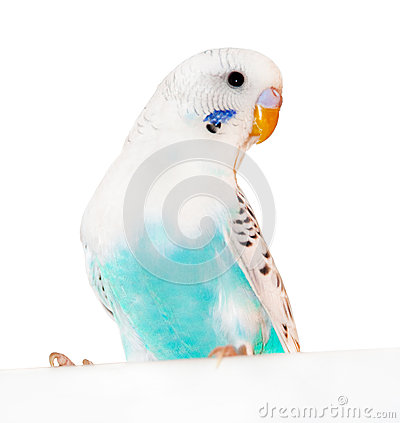 Free Parrot Stock Images - 31055574