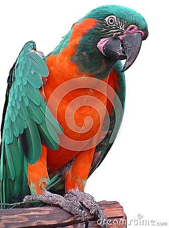 Free Parrot Stock Photo - 5211940