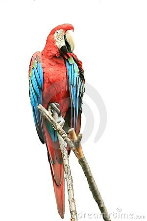 Free Parrot Royalty Free Stock Images - 6153019