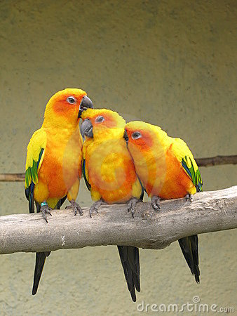 Free Parrot Stock Photography - 8664092