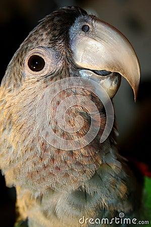 Free Parrot Stock Photo - 9643270