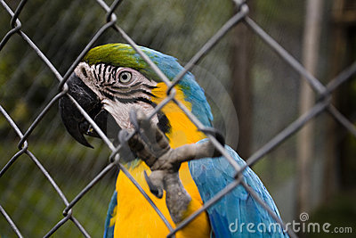 Parrot in Aviary