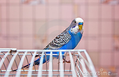 Parrot on a cage
