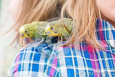 Parrot on child s shoulder
