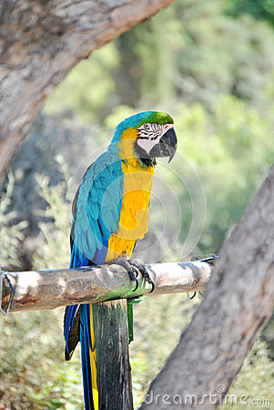 Parrot at zoo 2