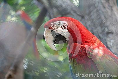 Parrot colorful