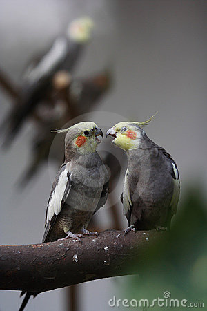 Free Parrot Couple Stock Photography - 13913592