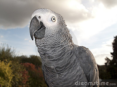 Parrot in Detail