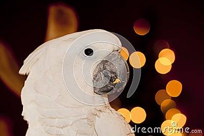 Parrot detail.