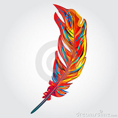 parrot feathers wallpaper