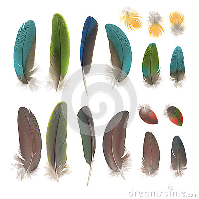 Free Parrot Feathers Royalty Free Stock Photos - 31007258