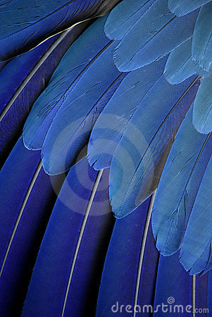 Free Parrot Feathers Royalty Free Stock Photo - 5463405