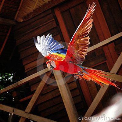 Free Parrot Flying Stock Photos - 4086713