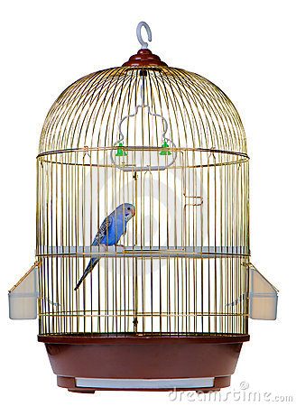 Free Parrot In Cage Stock Images - 19219324