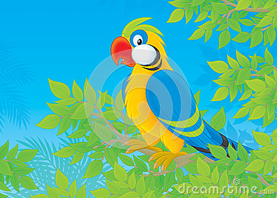 Parrot in jungle