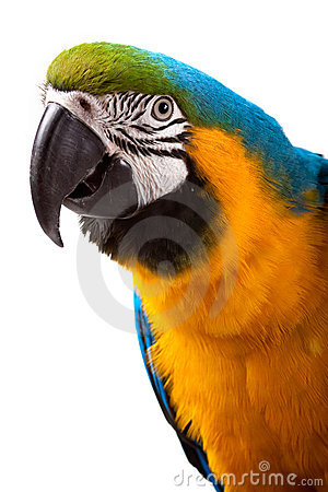 Free Parrot - Macaw Stock Images - 9588554