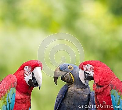 Parrot meeting