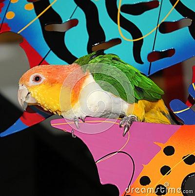 Parrot Perched