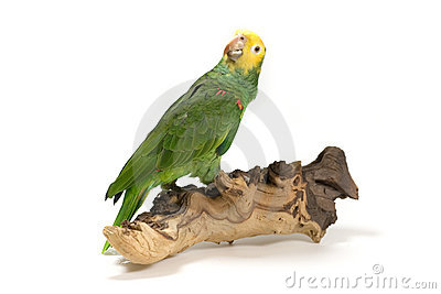 Parrot perched on wood