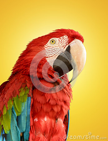 Free Parrot Red Blue Macaw Stock Images - 38902614
