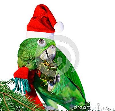 Free Parrot Santa Stock Image - 1346761