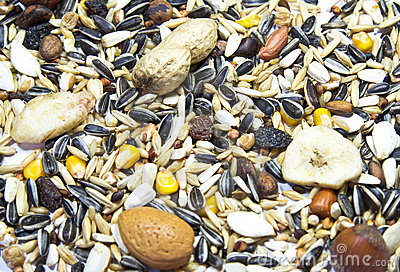 Parrot Seed