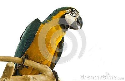Parrot on a stand