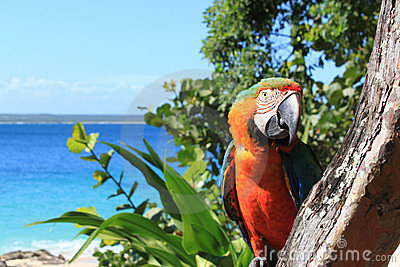 Parrot on tropical beach