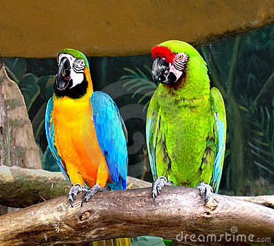 Free Parrots Royalty Free Stock Images - 144079
