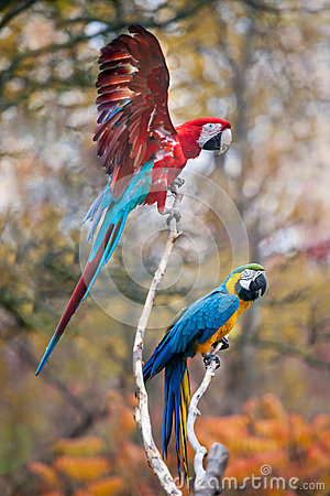 Free Parrots Stock Photos - 60411343