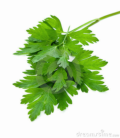 Free Parsley Royalty Free Stock Images - 20941139