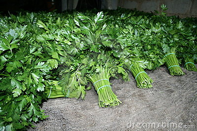 Parsley in a piles